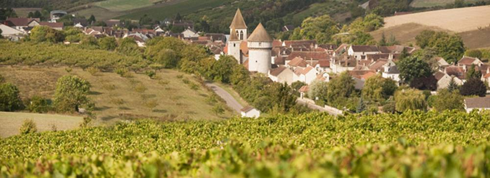 Discover the vineyards Auxerrois